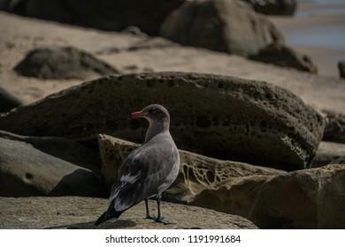 Bird on california beach rocks