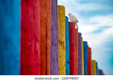 Bird on Colorful Fence Wall