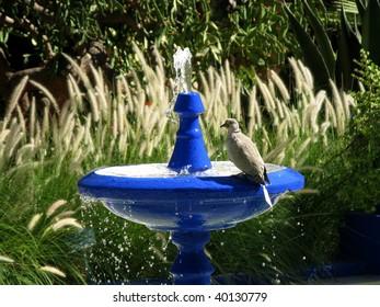 Bird on the drinking fountain