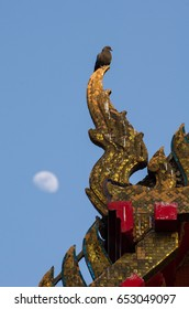 bird on gable apex thai temple roof with moon on afternoon, Thailand