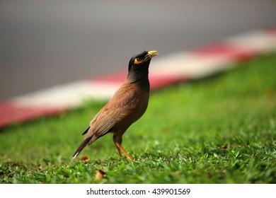Bird on grass field