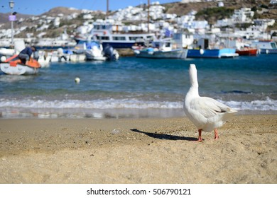 A bird on harbour