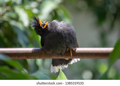 Bird on the iron rod, Sunlight open the mouth Phew This is hot