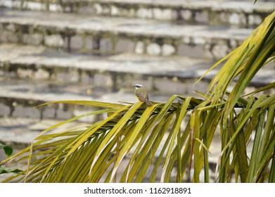 Bird on palm branch. Cuetzalan Del Progreso, Puebla Mexico.