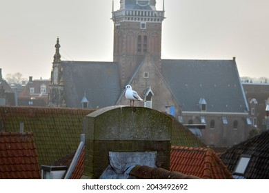 A bird on the roof of an old holland town. High quality photo