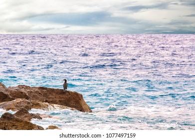 Bird on the stone near the sea