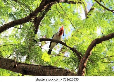 Bird on the trail up to Diamondhead