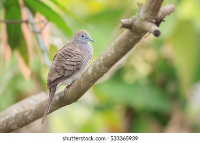 Bird on the tree.