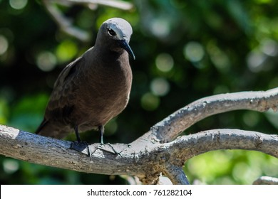 Bird on the tree, shot at lle Aux Cocos, Rodrigues Island, Mauritius