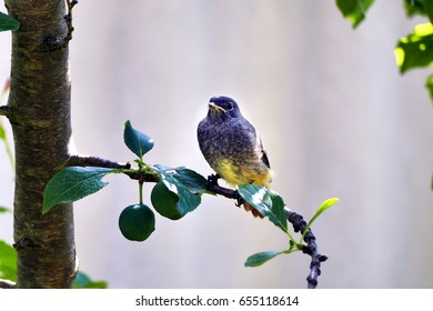 Bird on twig