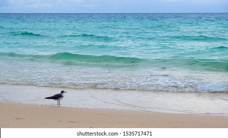 Bird on white sand banks at the caribbean ocean.