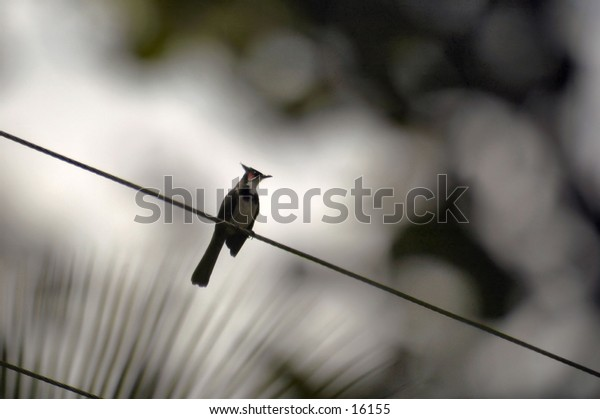 Bird on a wire with diffused leaves in background