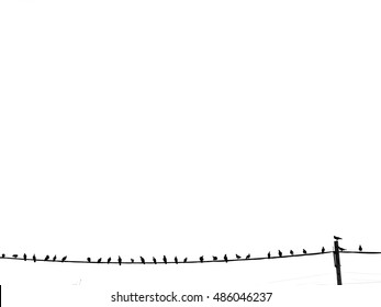 Bird on a wire silhouette