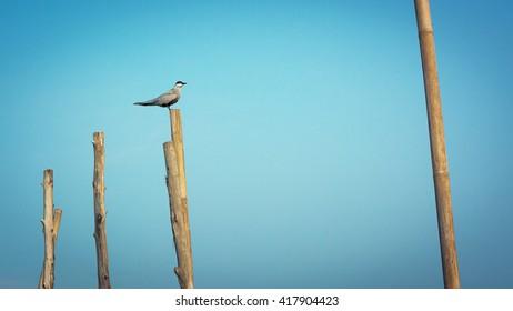 A bird on wooden pilings