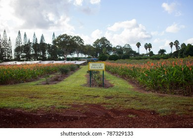Bird of Paradise Crop with Sign on Plantation in Hawaii