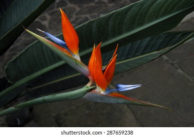 The bird of paradise flower, spring, background, flowers, flower, nature, floral, garden, summer, beautiful, landscape, pink, blossom, white, tree, green, sun, field, season, beauty, natural, plant,