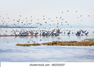 Bird paradise, Manyas