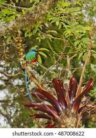 Bird of Paradise, Mirador de Quetzales, Costa Rica