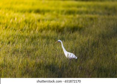 Bird in the pasture