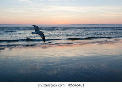 A bird photobombs the beach at dusk with reflections of the sunset on the sand