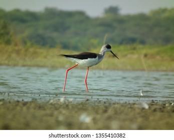 Bird photography at thol bird sanctuary