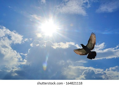Bird ( Pigeon ) Flying above clouds on a fresh summers day