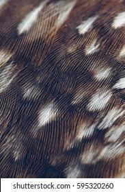bird plumage background closeup, natural pattern, macro photo