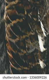 bird plumage background, macro photo, abstract texture