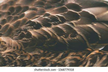 bird plumage background, macro photo, abstract texture