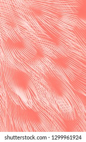 bird plumage texture in a living coral tone, color of the Year 2019
