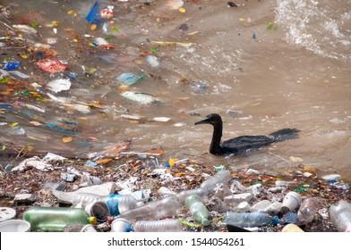 Bird in polluted water of the Rio de la Plata, Buenos Aires