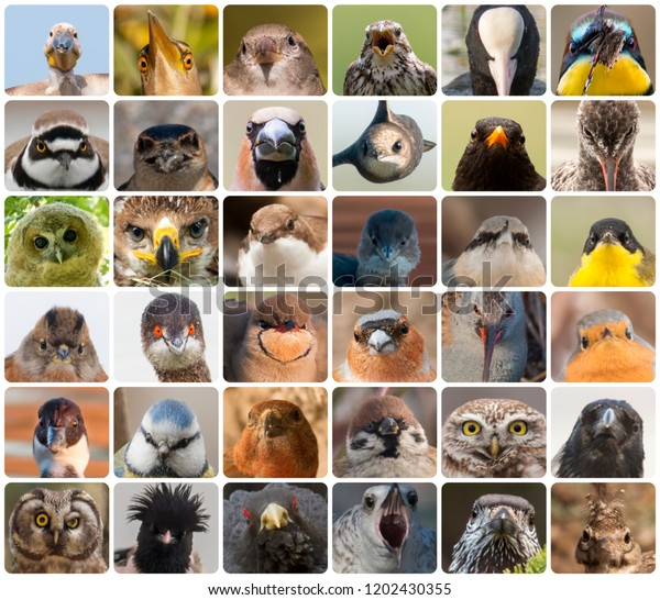 Bird portrait collage