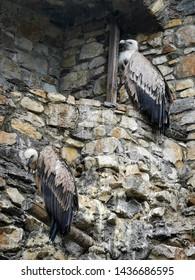 bird of prey on the wall