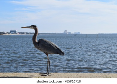 Bird profile with ocean background Biloxi Mississippi