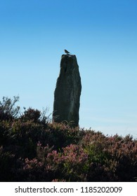 a bird in profile perched on a tall neolithic standing stone in midgley moor surrounded by heather in west yorkshire