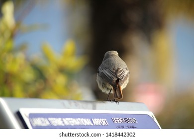 A bird is ready to take off from the upper edge of information plaque.