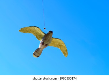 Bird repeller imitating hawk or falcon hanging on rope, wind can move it around.