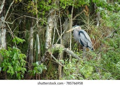 Bird resting in the everglades