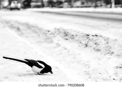 bird resting on the snow in the street