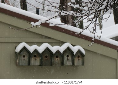 Bird Rowhouse snow covered roof
