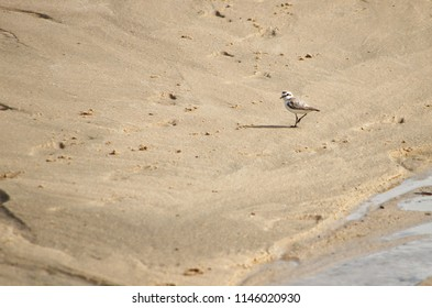 Bird in the sand near the water
