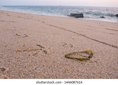 Bird / Seagull footprints in the sand on beach with seaweed