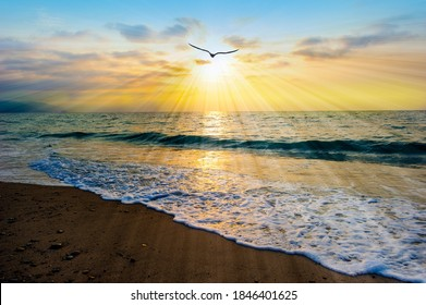 A Bird Silhouette is Flying Towards the Light As Sun Rays Emanate From the Ocean Sunset Sky