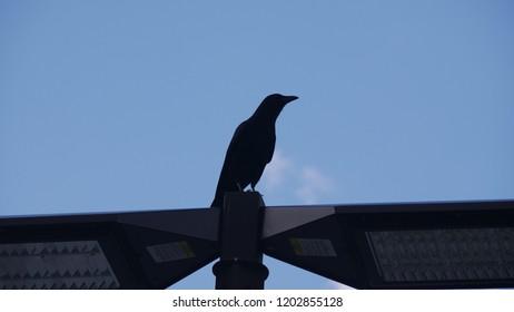 Bird silhouette on lamp against blue sky