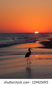 Bird silhouette of a bird at sunset on the beach