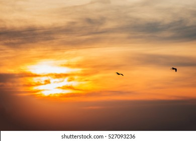 bird silhouettes flying evening sunset