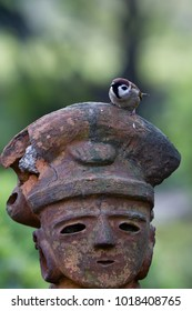 bird sit on the head of a statue