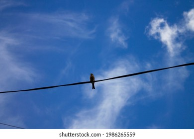 The bird sits on electric telephone wires on a clear day against the background of a blue sky with clouds.
