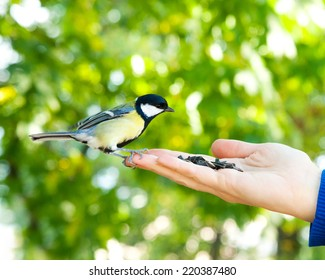 Bird sits on human hand. People feed the tit.