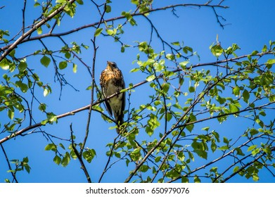 The bird sitting on a branch